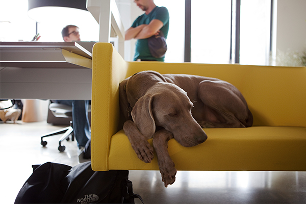 office-dog